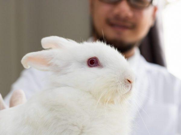 Почему у кроликов заплывают глаза