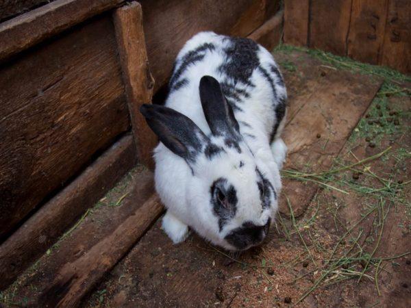 Для строительства крольчатника категорически не подходит металлические сооружения. Т.к зимой в таком домике животные могут замёрзнуть, а летом ― перегреться