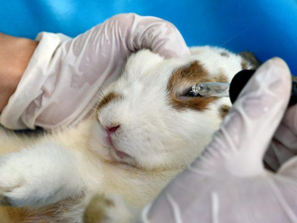 Кератит - это воспаление роговицы. Ветеринар в таких случаях назначает противоспалительные мази или капли, промывания глаза