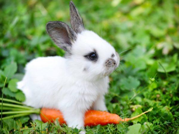 Летний и зимний рацион кроликов отличается. Летом он более разнообразный, витаминизированный, а зимой он состоит из соломы и сена