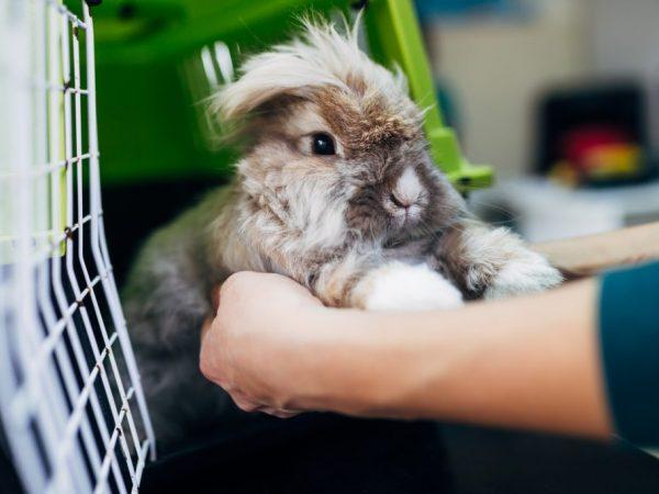 Профилактика конъюнктивита у кроликов заключается в регулярной уборке клетки