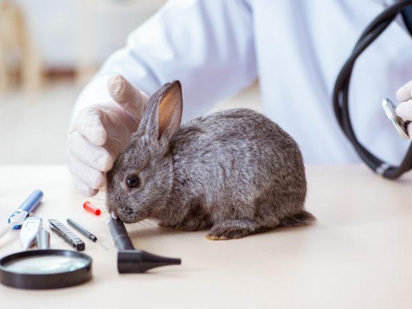 Данные недуг обычно возникает при запущенном кератите или язве роговицы, а также при инфекционных заболеваниях