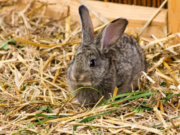 С целью предотвращения распространения инфекции практикуют изоляцию заболевших животных, раздельное содержание и карантин