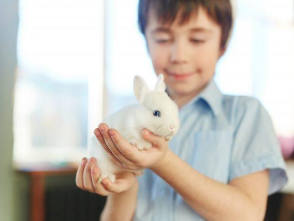 Для кролика необходимо создать условия для комфортного содержания в квартире. Для этого нужно приобрести или сделать просторную клетку