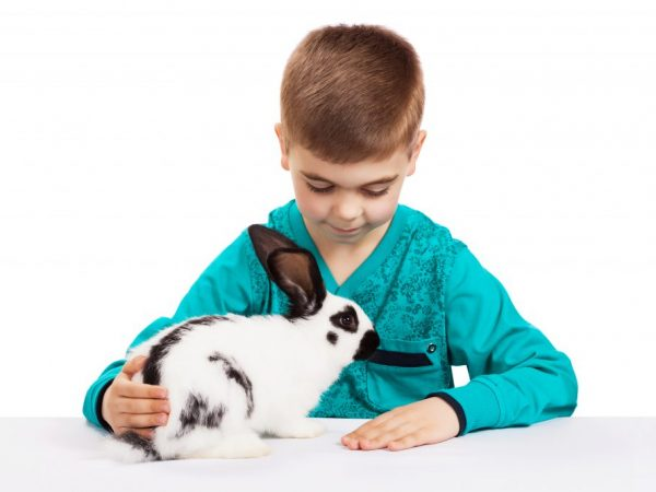 Нельзя допускать, чтобы кролики жили в темноте и сильно продуваемых помещениях, а вольеры необходимо постоянно держать в чистоте