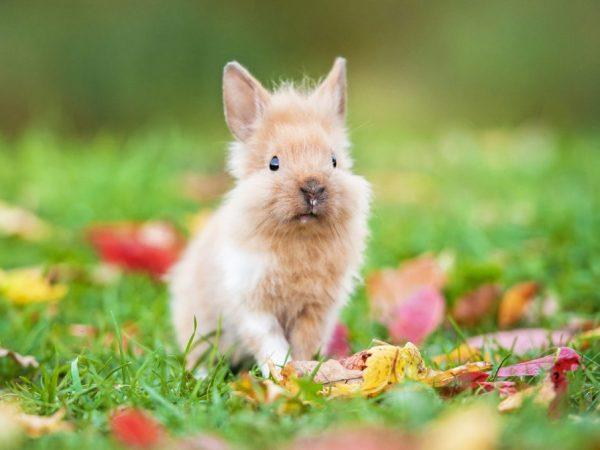 Кролики начинают рано плодиться