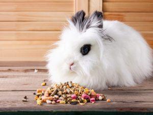 Правила ухода за декоративным кроликом