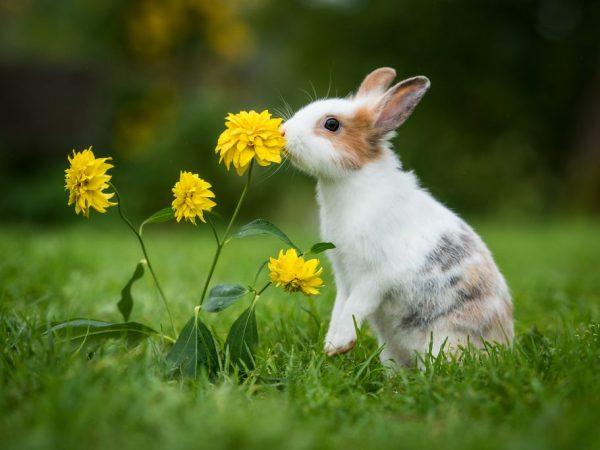 Кролики питаются не только травой