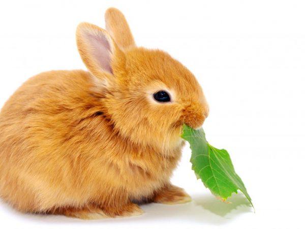 Кролики едят листики с разных деревьев