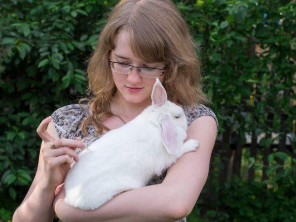 Правила вакцинации декоративных кроликов