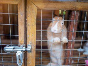 Обзор промышленных клеток для кроликов