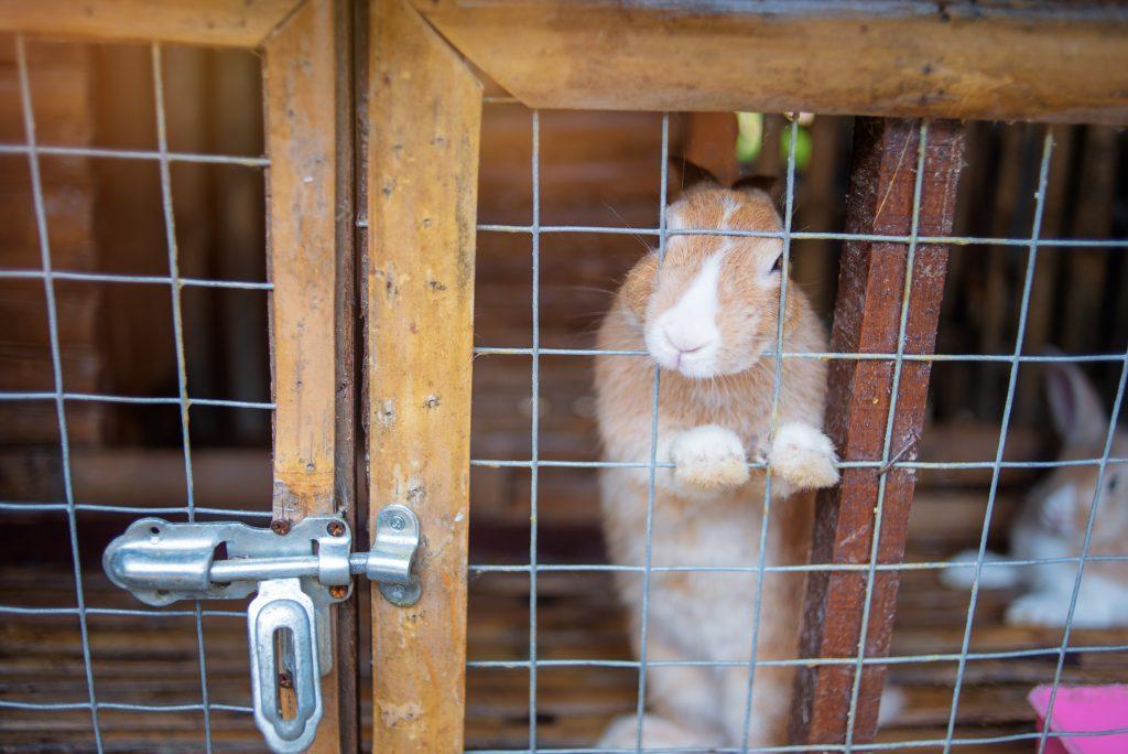 Промышленные клетки для кроликов