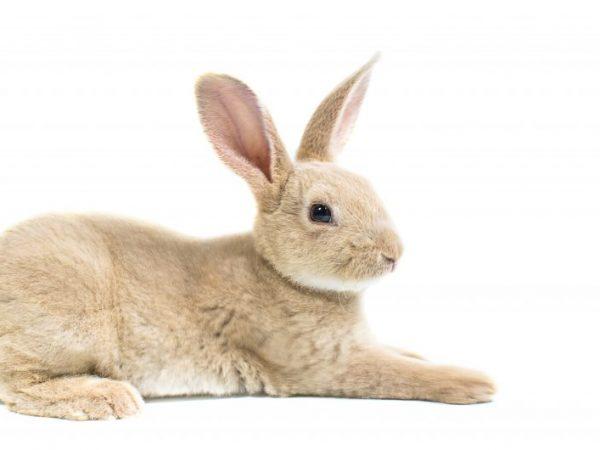 При бескровном методе животное сначала обездвиживают и отключают центральную нервную систему