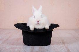Декоративные породы кроликов