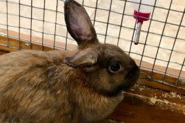 Поилки для кроликов