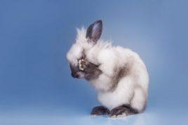 Причины слезоточивости глаз у кролика