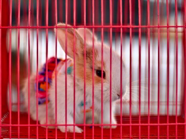 Клетка для декоративного кролика