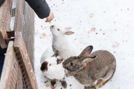 Кормление кроликов зимой
