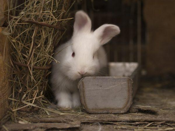 Продолжительность жизни кроликов в домашних условиях