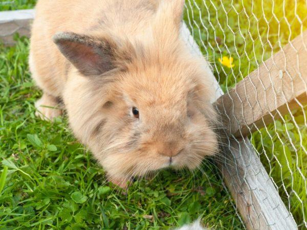 Идеальной клеткой считается та, которая больше зверька в 4 раза, и кролик может свободно по ней перемещаться