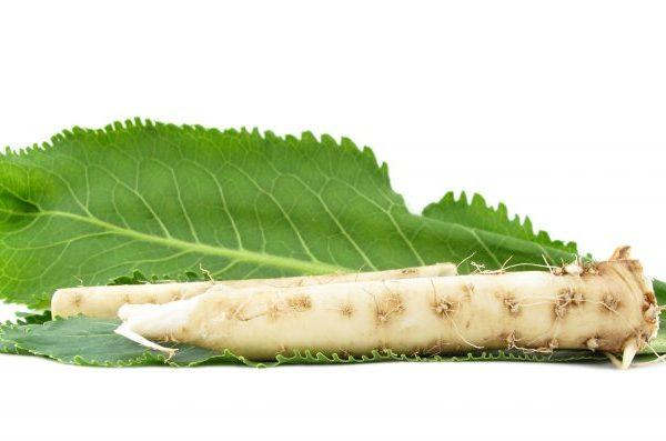 Листья и стебли хрена к августу или началу сентября накапливают достаточно витаминов, поэтому их уже можно срезать для засушки