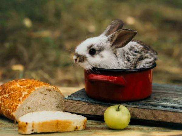 В качестве угощения кроликам лучше давать сухарики белой сдобы
