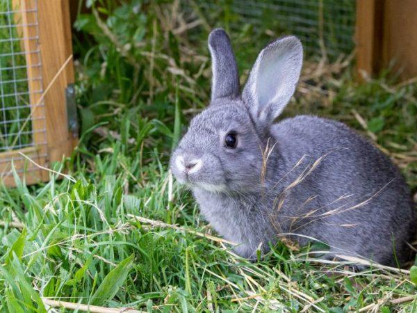 Любой крольчатник должен быть оборудован системами освещения, вентиляции и обогрева