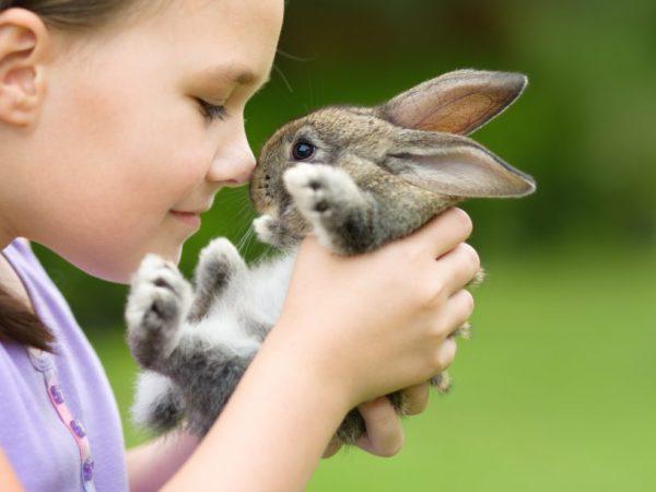Аллергическая реакция на кроликов появляется внезапно и симптомы быстро нарастают