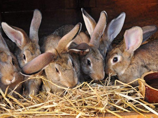Кролики очень милые создания