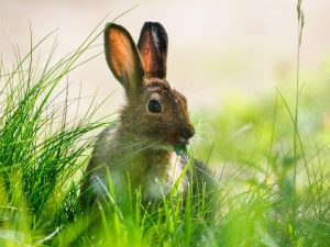 Рацион питания зайцев