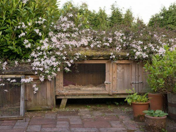 Помещение для кроликов должно быть комфортным и отвечать всем номам содержания
