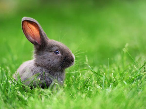 Лакомство в виде укропа и петрушки полезно для организма животных, но их надо давать в ограниченном количестве