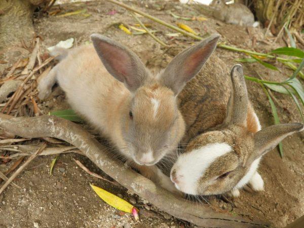 Огуречная ботва, также не является питательным кормом, кроме того кроликам не очень нравится мелкие колючки на стеблях