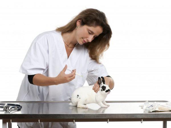 Для чего проводится вакцинация кроликов
