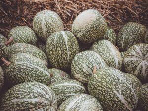 Выращивание фиголистной тыквы