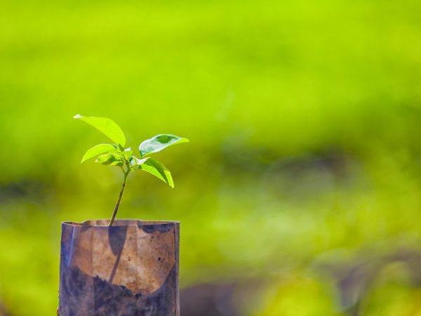 Посадкой молодого деревца можно заниматься весной и осенью