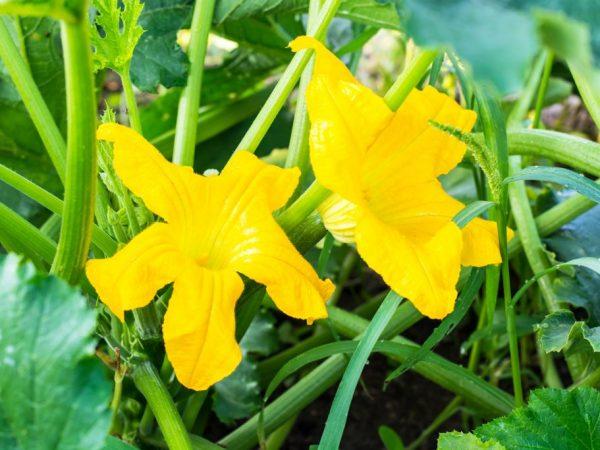 На урожайность растений влияет качество ухода