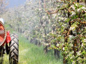Весенняя и осенняя обработка яблонь мочевиной