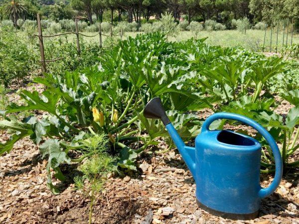Удобрения улучшают урожайность растений