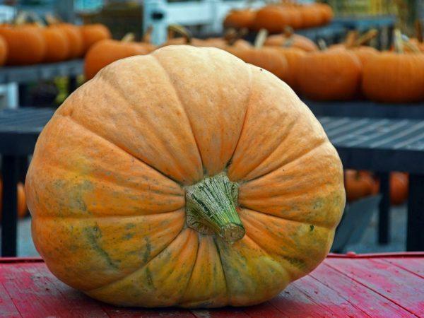 Гигантские овощи выставляются на многих конкурсах