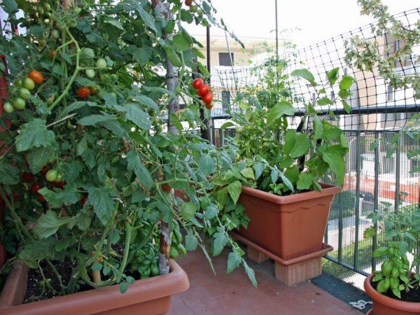 Растения нужно обязательно удобрять