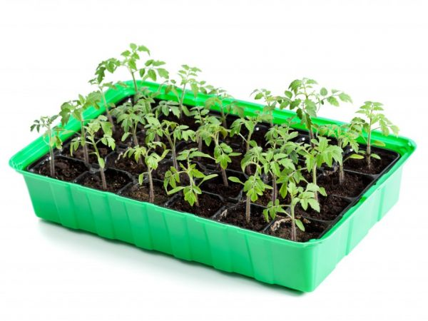 Рассаду можно высаживать в июне