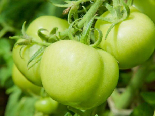 Подкормки благотворно влияют на растения
