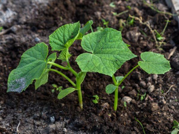 Правильный уход сохранит здоровье растений