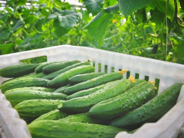 Правильный уход обеспечит вас вкусным урожаем