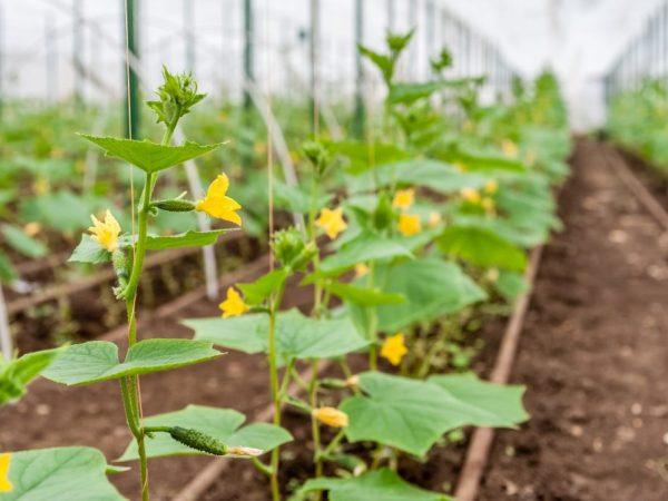 Обработка защитит растения от вредителей