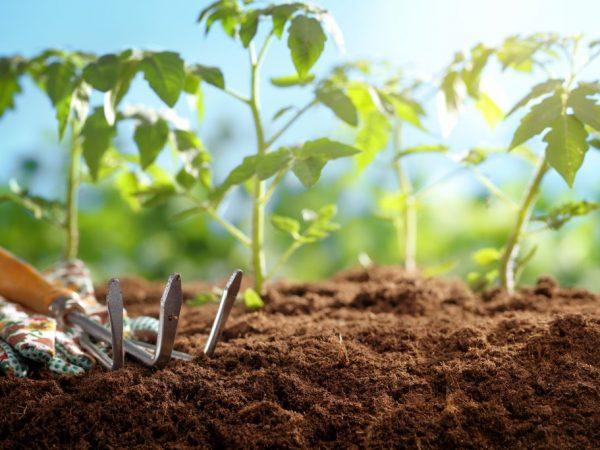 Рассаду необходимо удобрять