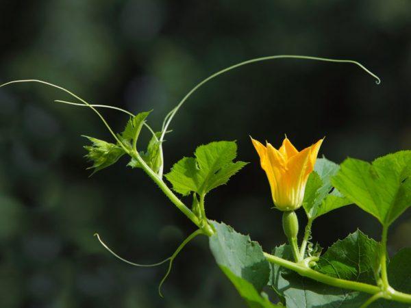 От качества ухода зависит здоровье растения