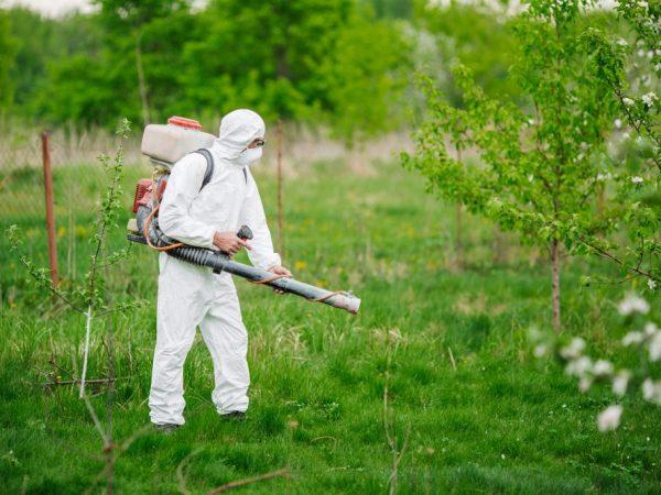 Обработка позволит уберечь дерево от болезней