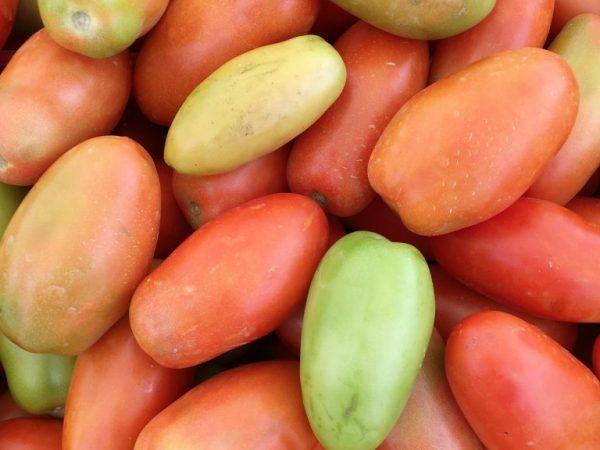 Сорт позволяет получить хороший урожай в любую погоду